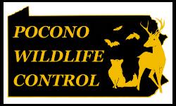 Pocono Wildlife Control
